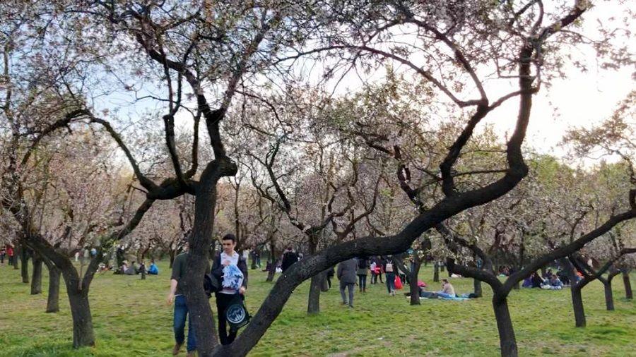 Quinta Molinos Park in Madrid